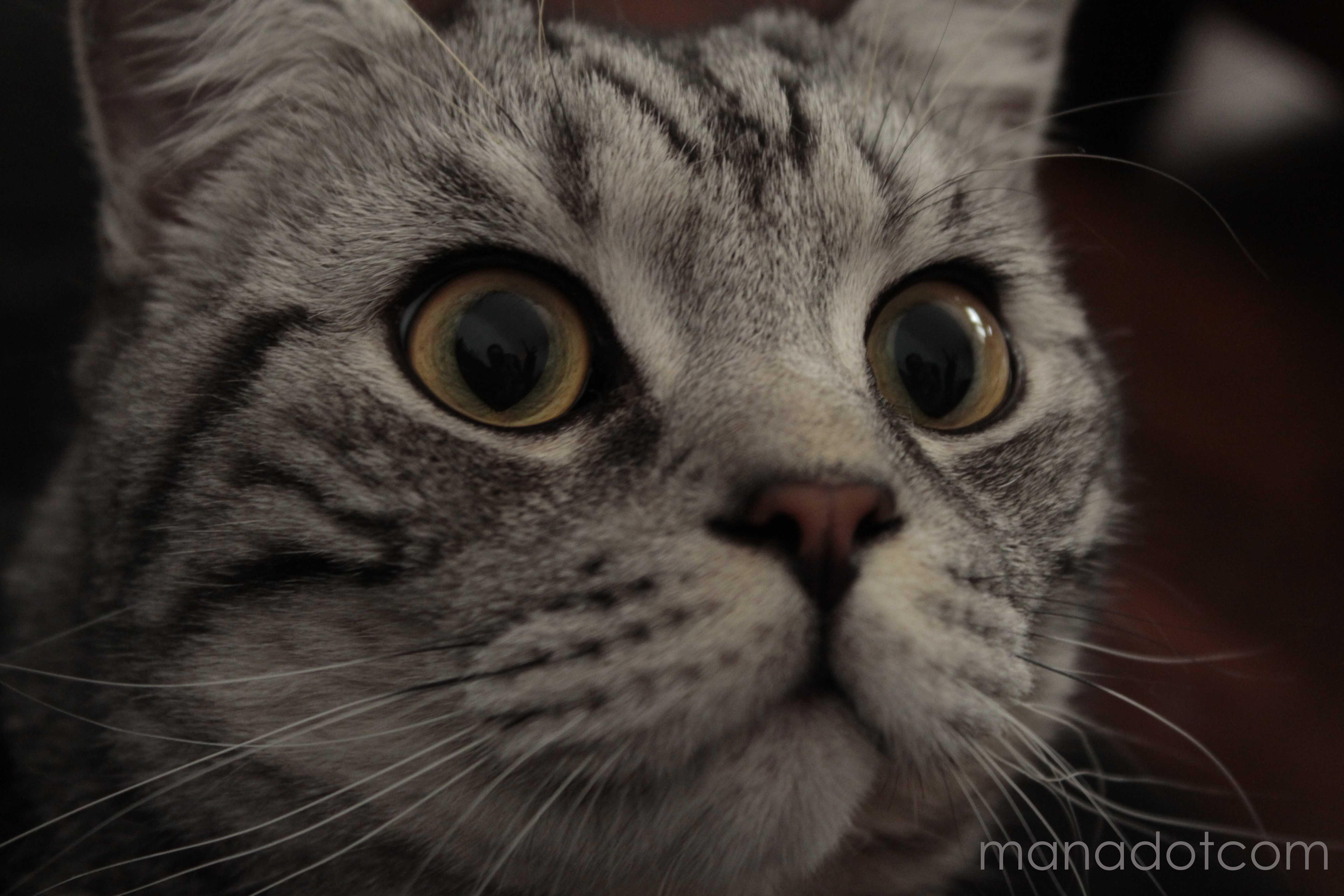 comment avoir les yeux d un chat